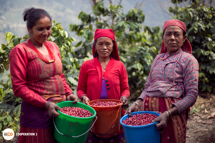 Give Coffee Farmers Access to Detailed Weather Information