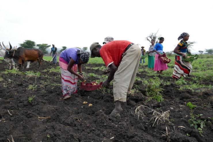 Potato Farmers Learn How to Negotiate