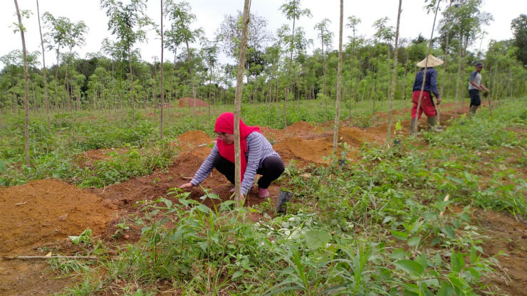 First Demo Plot Being Prepared in SpiceUp Project