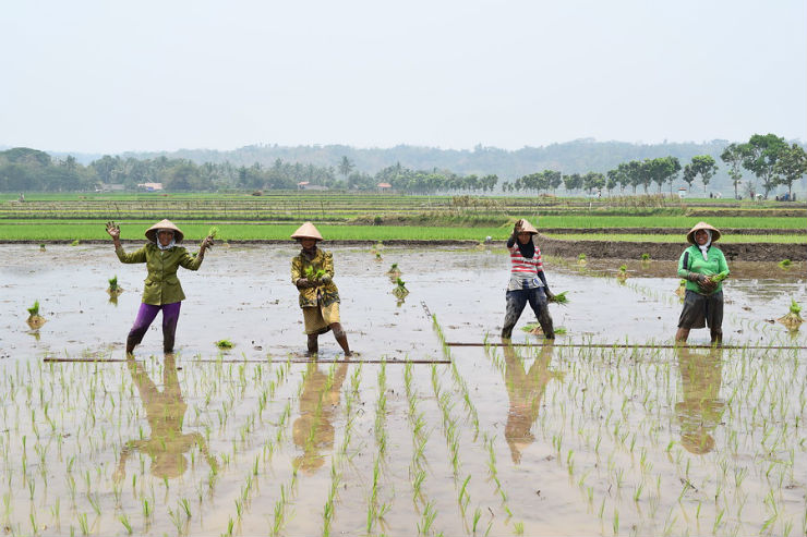 How Indonesian Rice Farmers Become Real Professionals