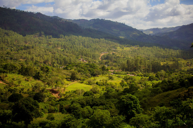 Honduras and the EU Sign Historic Agreement on Trade and Forest Legality