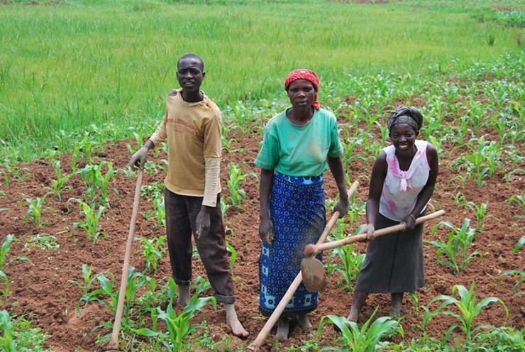 Combating Fungal Diseases in Rwandan Agriculture