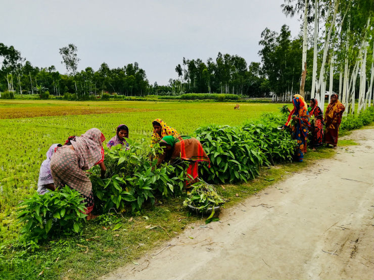 Growing Medicinal Herbs on a 14 km Road Side in Bangladesh