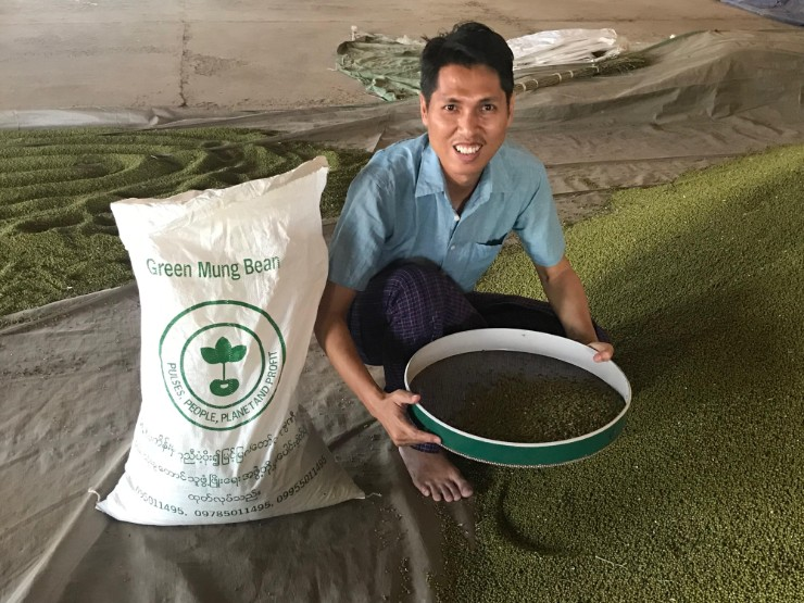 First Ever Collective Marketing Agreement for Mung Bean Farmers in Myanmar