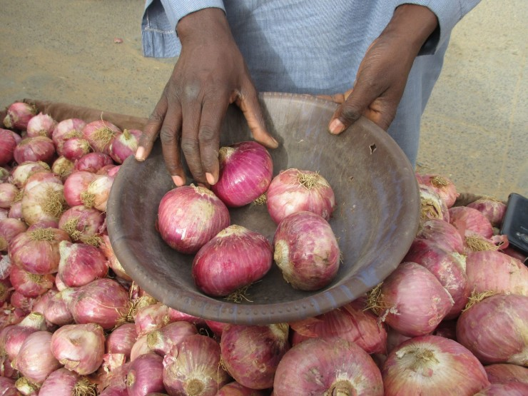 Peeling of the Onions of Senegal: Tool Mobile Market