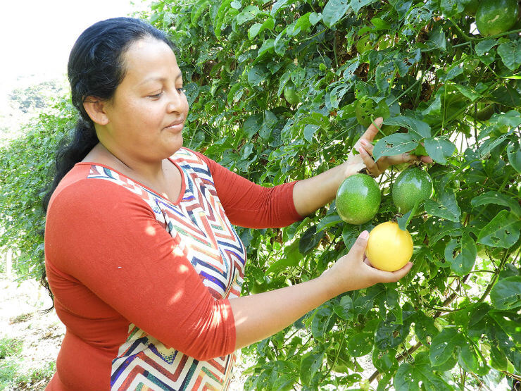 Colombian Rural Peace 2: Supporting Agrifood Entrepreneurs