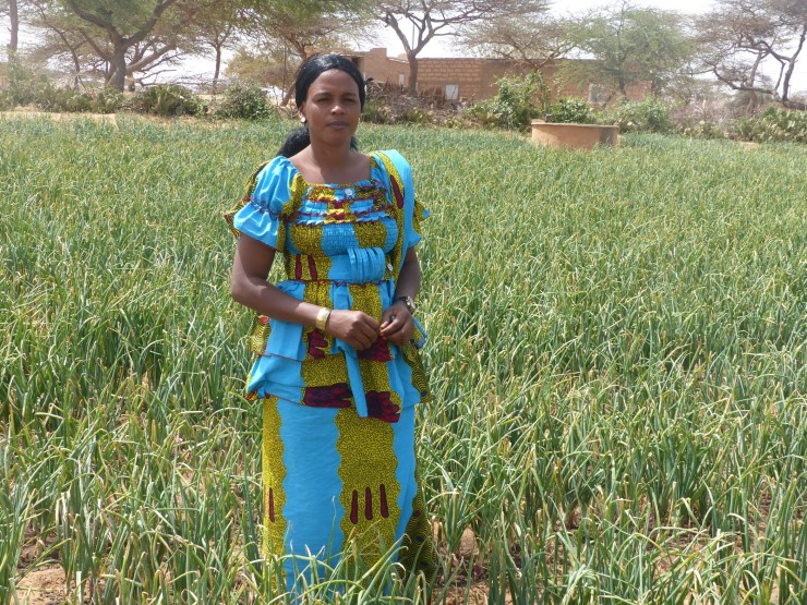 Boosting the Onion Value Chain in Senegal