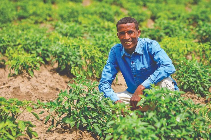 Linking Potato Farmers in Ethiopia to Senselet