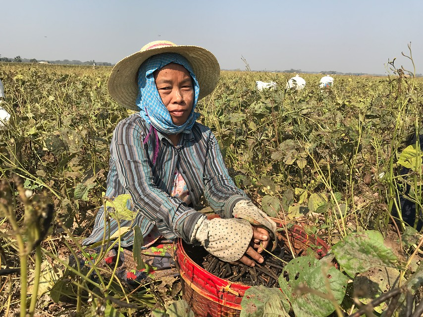 Two Important Agreements for Mung Bean Farmers in Myanmar