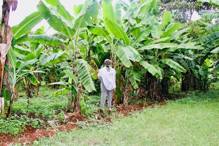 farmer ethiopia field