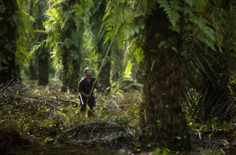 New Project Strengthens Palm Oil Villages in Indonesia