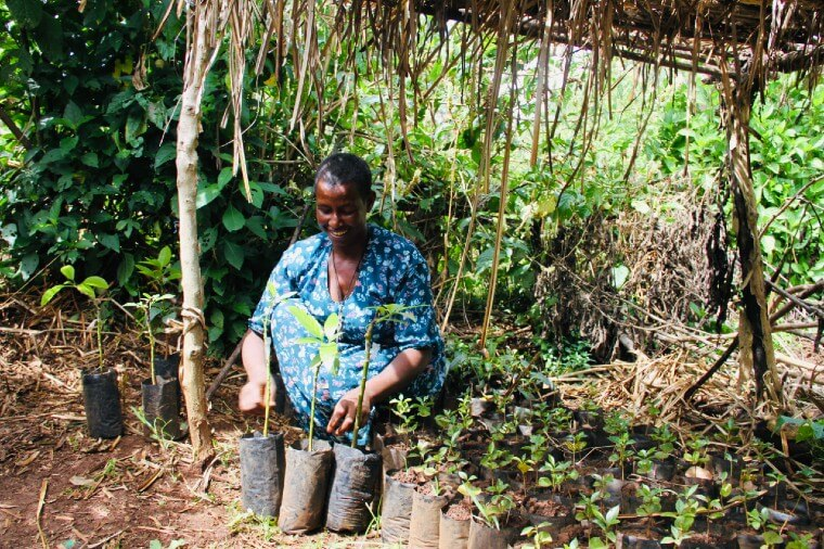Grafting:  A Promising Business for a Determined Woman