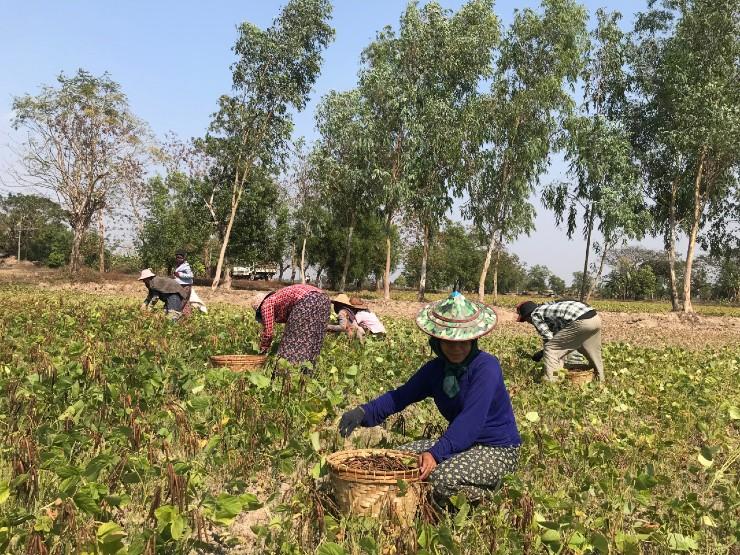 Labor farmers Myanmar