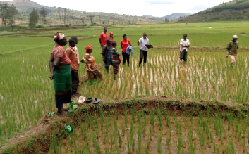 How to Scale Fee-Based Services within Producer Organizations in Rwanda