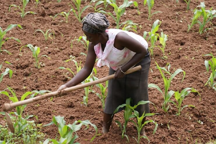 Women's Participation in the Maize and Bean Value Chains in Rwanda