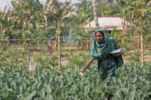 female farmer Bangladesh - project: salt solution