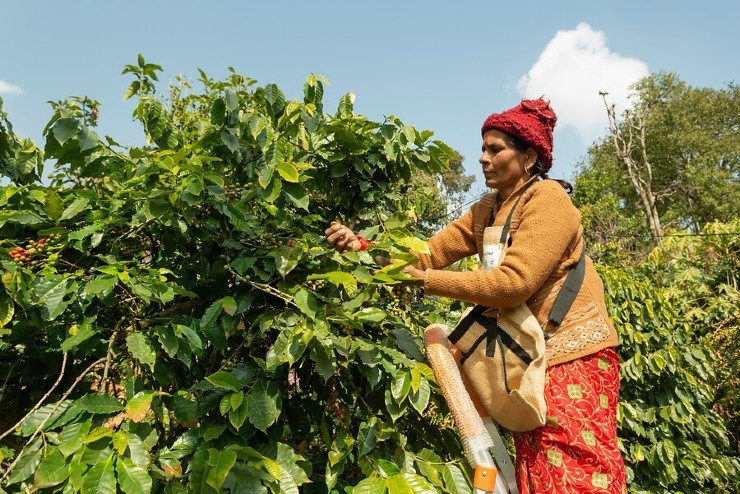 Webinar on the Impact of COVID-19 on Nepalese Coffee Supply Chain