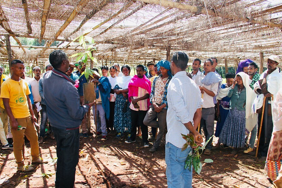 Seedling Production as a Potential Business for Youth