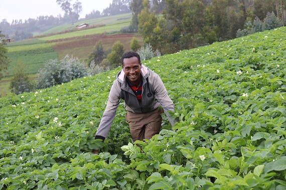 Improving The Potato Seed Production Chain For Smallholder Farmers in Ethiopia