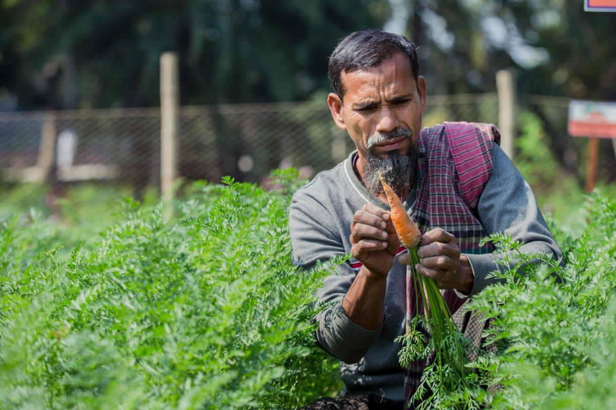 Groei van zilte landbouw in Bangladesh met dank aan Nederlandse innovatie